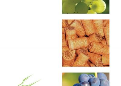 pagina esempio brochure vino